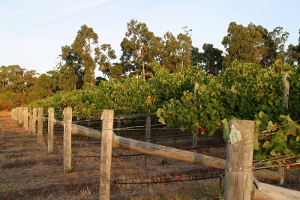 About_Margaret_River_Wine