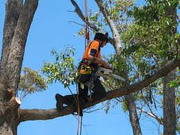 perth-tree-services